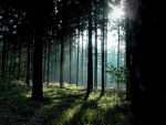 Lit Forest 558714 by StockProject1