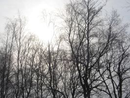 black trees by natalie-stock