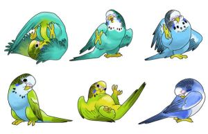Cute-Ass Parakeets by vagrantvulpes
