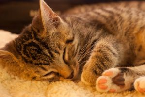Sleeping Kitten by Razputin42