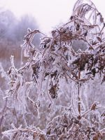 cold flora by lalousha2