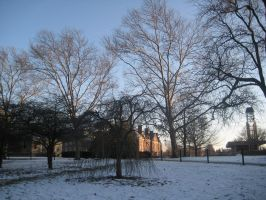 UIUC Trees by kitchan333