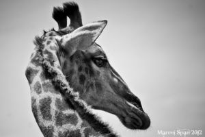 Looking over your shoulder by MJWallace