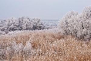 Winter landscape near Braila by Raineater