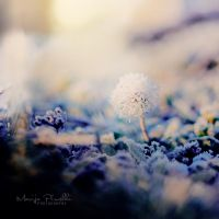 Frosty morning by Piroshki-Photography