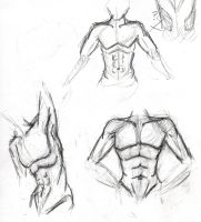 anatomy practice by TheMim