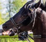 Horse Racing 390 by JullelinPhotography