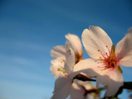 Blossom3 by luvBEX