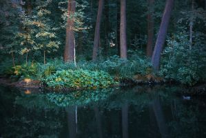 pond by PhotoFrama