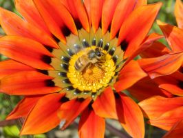Bee 002 - Hb593200 by hb593200