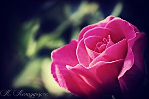 Rose. by redbloodonly