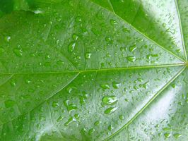 Rain drops of leaf by dazzle-textures