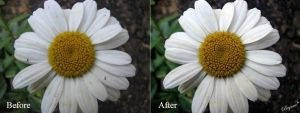 White Love Before and After by AllForHim1616