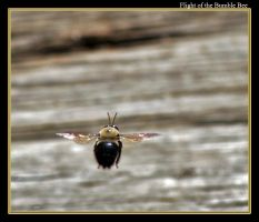 Flight of the Bumble Bee by boron
