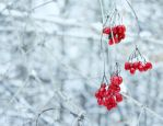 hello again, winter! by Unassailably