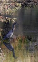 Blue Heron by TRunna