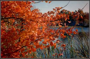 Fall on a River by Tailgun2009