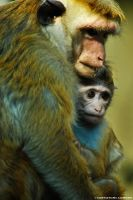 baby monkey with his mother by rockmylife
