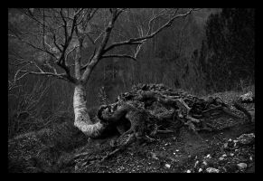 Untitled tree. by Bluvertical