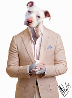 Pitbull by wittch