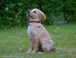 I can sit like a real dog by NiviHolm