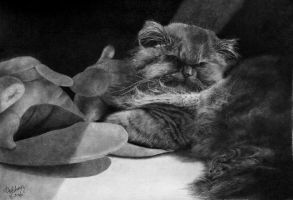 My 8th cat drawing. by paullung