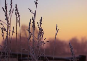 Colors of winter by Initio