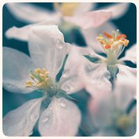 Blossom - 6 by anjali