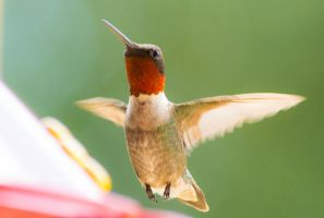 Hummer 2014-07-04 by justanewb42