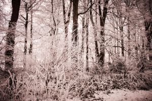 Frosty Woods. by BadgerJames