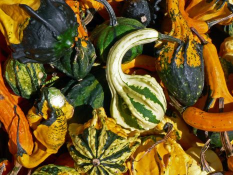 Gourdian Knot III by magpie-poet