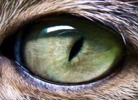 cat's-eye from lilly by msfotopbg
