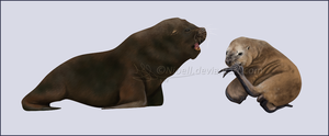 South American Sea Lion by Nioell