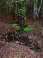Artesian Spring and Ferns by mmad-sscientist