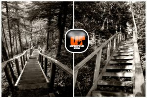 Stairs in the Woods by Unrestricted-Stock