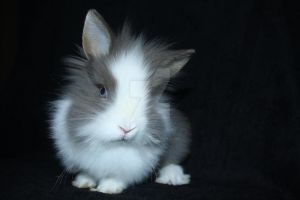 bunny by Itchys-rats