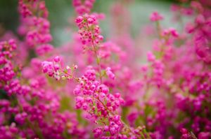 Flowers #03 by GoJaa