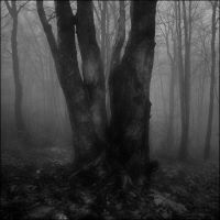 Mystic Forest by aponom