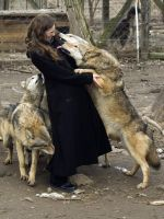kiss of the wolf by szorny-stock