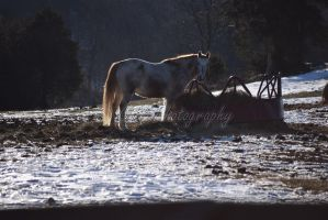 Horse Stock by PeterStoneandBreyer