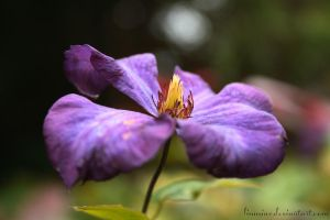 The beauty is purple by Linuziux