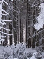 forest in winter by squirrel-chaser