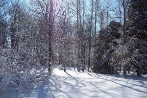 Snow Covered Christmas by 14658