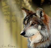 Nature collection- Wolf in the forest by TERRIBLEart