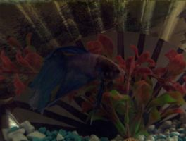 THIS IS SPARTA THE FISH by Imura-chan