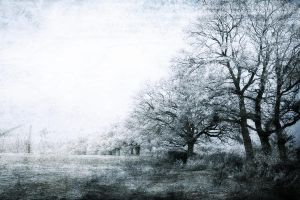 Background stock winter by Eilicestock