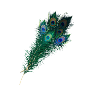 Peacock Feather Png by Asher-Bee