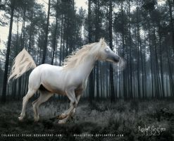 HP Order-Storm by Ragdoll-Graphics