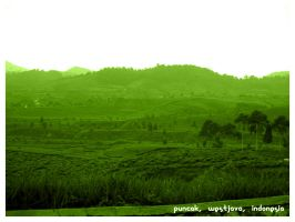 puncak by indonesia