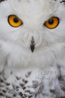 Snowy Stare by Tienna